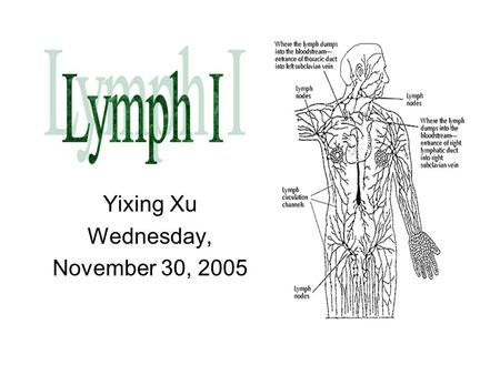 Yixing Xu Wednesday, November 30, 2005. Central = Primary lymphoid tissue Site of maturation of the cells of the immune system Bone marrow –B cells, monocytes,