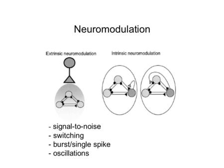 Neuromodulation - signal-to-noise - switching - burst/single spike - oscillations.