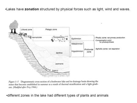 Lakes have zonation structured by physical forces such as light, wind and waves. different zones in the lake had different types of plants and animals.