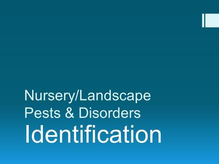 Nursery/Landscape Pests & Disorders Identification.