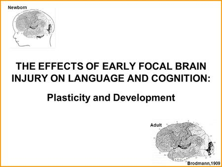 THE EFFECTS OF EARLY FOCAL BRAIN INJURY ON LANGUAGE AND COGNITION: Plasticity and Development Newborn Adult Brodmann,1909.