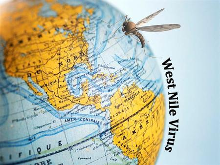 What is West Nile Virus? A mosquito transmitted virus that causes mild to severe illness and is commonly found in birds, humans and other mammals.