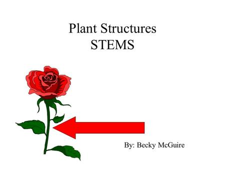 Plant Structures STEMS By: Becky McGuire. Purposes a. attachment point for leaves, flowers, fruit b. contain food and water distribution system (vascular.