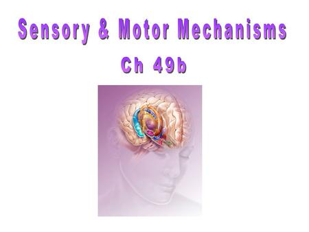 Sensory & Motor Mechanisms
