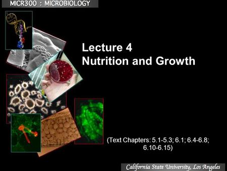 Lecture 4 Nutrition and Growth (Text Chapters: 5.1-5.3; 6.1; 6.4-6.8; 6.10-6.15)