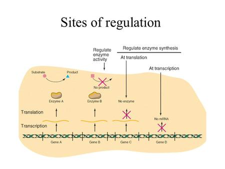 Sites of regulation. Feedback inhibition Mechanism of allosteric inhibition.