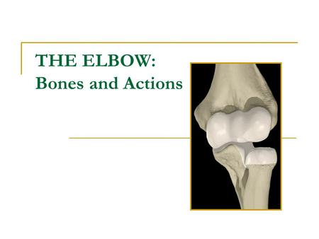 THE ELBOW: Bones and Actions