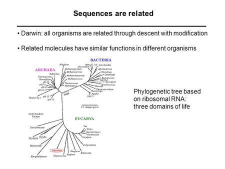 Sequences are related Darwin: all organisms are related through descent with modification Related molecules have similar functions in different organisms.