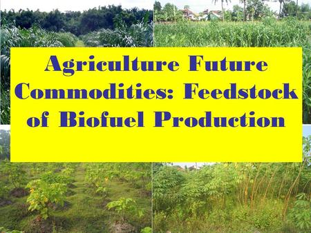 Agriculture Future Commodities: Feedstock of Biofuel Production.