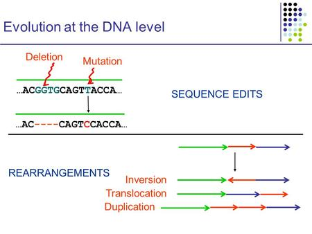 Evolution at the DNA level …ACGGTGCAGTTACCA… …AC----CAGTCCACCA… Mutation SEQUENCE EDITS REARRANGEMENTS Deletion Inversion Translocation Duplication.