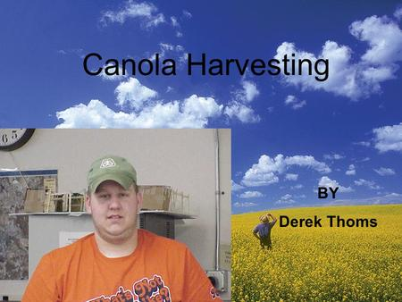 Canola Harvesting BY Derek Thoms. What can be used to harvest canola This is a grain head which is used to harvest small grain products like canola. This.