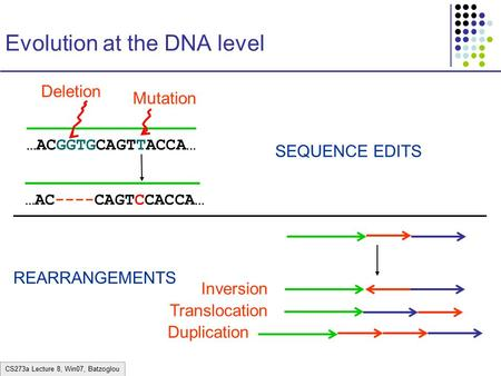 CS273a Lecture 8, Win07, Batzoglou Evolution at the DNA level …ACGGTGCAGTTACCA… …AC----CAGTCCACCA… Mutation SEQUENCE EDITS REARRANGEMENTS Deletion Inversion.
