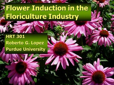 Flower Induction in the Floriculture Industry HRT 301 Roberto G. Lopez Purdue University.