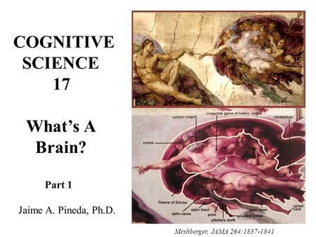 COGNITIVE SCIENCE 17 What's A Brain? Part 1 Jaime A. Pineda, Ph.D. Meshberger, JAMA 264:1837-1841.