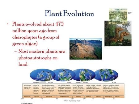 Plant Evolution Plants evolved about 475 million years ago from charophytes (a group of green algae) –Most modern plants are photoautotrophs on land.