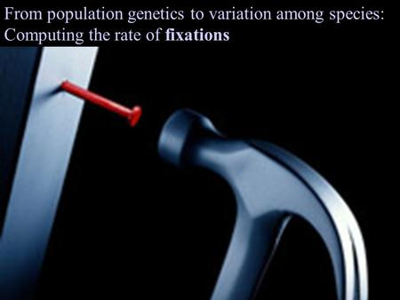 From population genetics to variation among species: Computing the rate of fixations.
