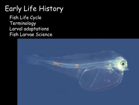 Early Life History Fish Life Cycle Terminology Larval adaptations Fish Larvae Science.