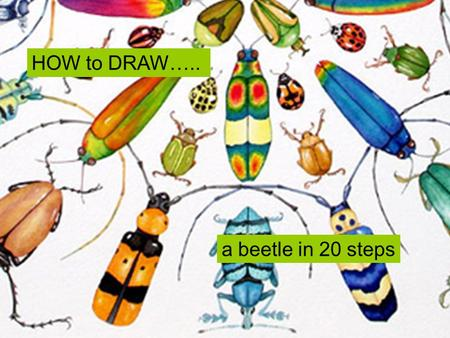 HOW to DRAW….. a beetle in 20 steps.