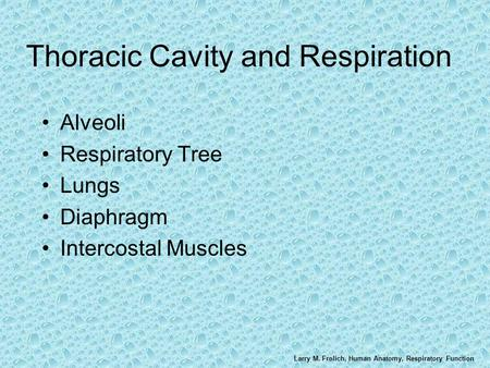 Larry M. Frolich, Human Anatomy, Respiratory Function Thoracic Cavity and Respiration Alveoli Respiratory Tree Lungs Diaphragm Intercostal Muscles.