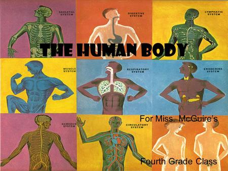 The Human Body For Miss. McGuire's Fourth Grade Class.