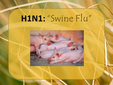 "H1N1: ""Swine Flu"". Why you should care… Every year between 5 and 20% of the population gets the flu. The CDC estimates that the flu kills 36,000 people."