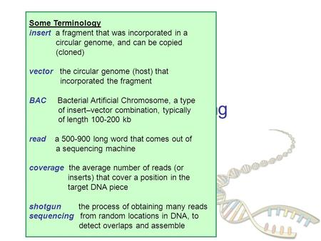 DNA Sequencing Some Terminology insert a fragment that was incorporated in a circular genome, and can be copied (cloned) vector the circular genome (host)