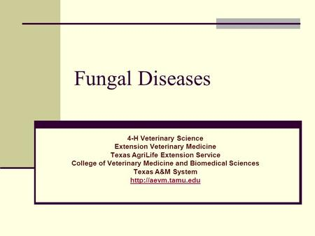 Fungal Diseases 4-H Veterinary Science Extension Veterinary Medicine Texas AgriLife Extension Service College of Veterinary Medicine and Biomedical Sciences.