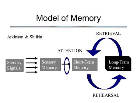Model of Memory RETRIEVAL Atkinson & Shifrin ATTENTION Sensory Signals