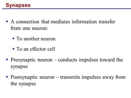 A connection that mediates information transfer from one neuron: