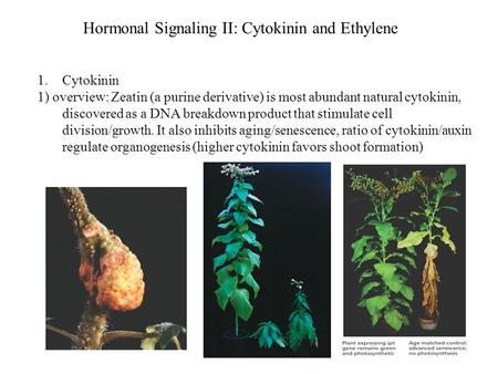 Hormonal Signaling II: Cytokinin and Ethylene 1.Cytokinin 1) overview: Zeatin (a purine derivative) is most abundant natural cytokinin, discovered as a.