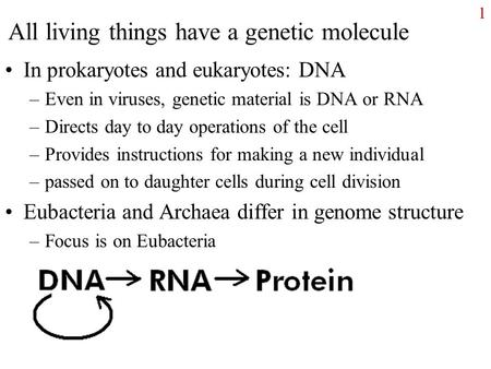 All living things have a genetic molecule In prokaryotes and eukaryotes: DNA –Even in viruses, genetic material is DNA or RNA –Directs day to day operations.