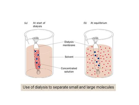 Use of dialysis to separate small and large molecules.