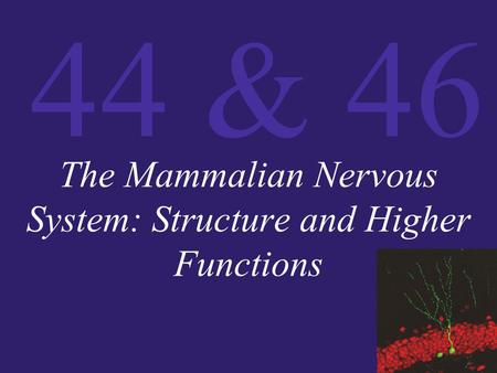 The Mammalian Nervous System: Structure and Higher Functions