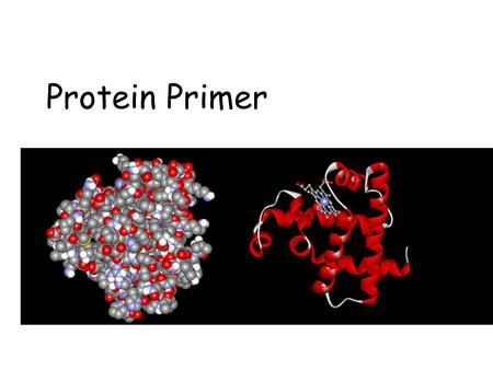 Protein Primer. Outline n Protein representations n Structure of Proteins Structure of Proteins –Primary: amino acid sequence –Secondary:  -helices &