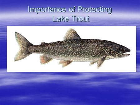Importance of Protecting Lake Trout. 250,000 lakes in Ontario 1% of these contain lake trout Central/eastern Ontario has >1/3 of lakes Provincial responsibility.