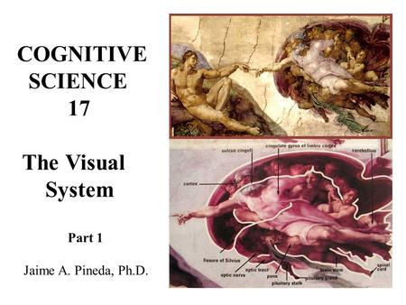 COGNITIVE SCIENCE 17 The Visual System Part 1 Jaime A. Pineda, Ph.D.