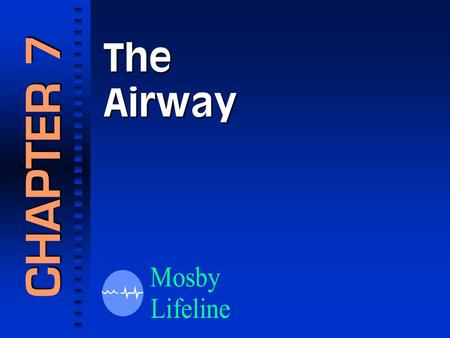 The Airway CHAPTER 7. The Respiratory System Respiratory Anatomy.