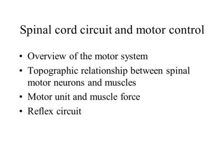 Spinal cord circuit and motor control Overview of the motor system Topographic relationship between spinal motor neurons and muscles Motor unit and muscle.