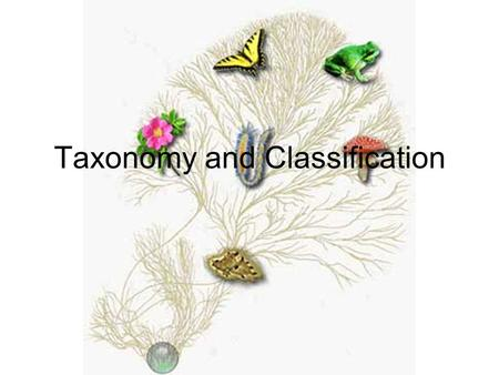 Taxonomy and Classification. Taxonomy is The classification of organisms in an ordered system that indicates natural relationships.