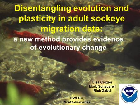 Disentangling evolution and plasticity in adult sockeye migration date: a new method provides evidence of evolutionary change Lisa Crozier Mark Scheuerell.