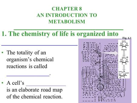 CHAPTER 8 AN INTRODUCTION TO METABOLISM The totality of an organism's chemical reactions is called _______________. A cell's ______________ is an elaborate.
