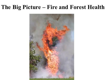 The Big Picture – Fire and Forest Health. Over stocked mature stands.