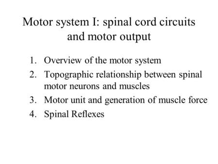 Motor system I: spinal cord circuits and motor output 1.Overview of the motor system 2.Topographic relationship between spinal motor neurons and muscles.