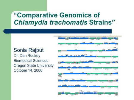"""Comparative Genomics of Chlamydia trachomatis Strains"" Sonia Rajput Dr. Dan Rockey Biomedical Sciences Oregon State University October 14, 2006."