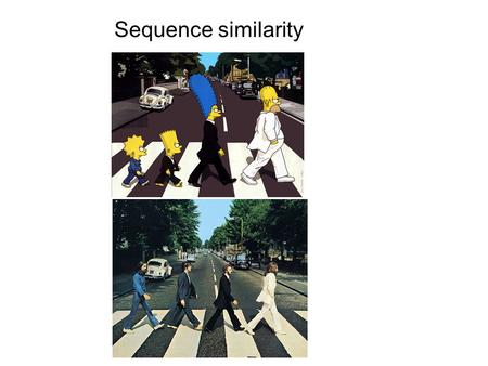 Sequence similarity.