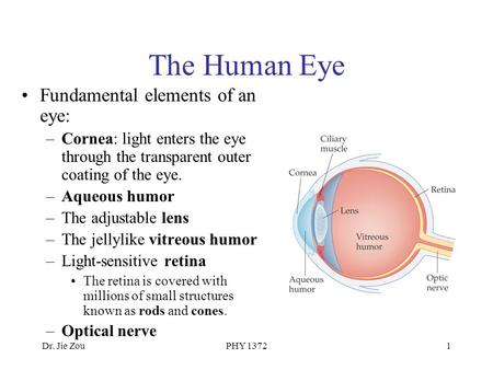 Dr. Jie ZouPHY 13721 The Human Eye Fundamental elements of an eye: –Cornea: light enters the eye through the transparent outer coating of the eye. –Aqueous.