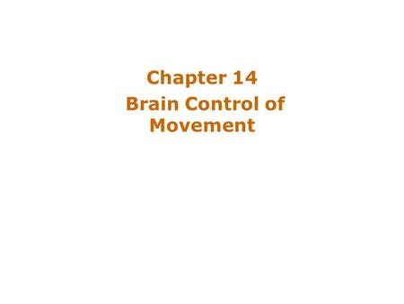 Chapter 14 Brain Control of Movement. Introduction The brain influences activity of the spinal cord –Voluntary movements Hierarchy of controls –Highest.
