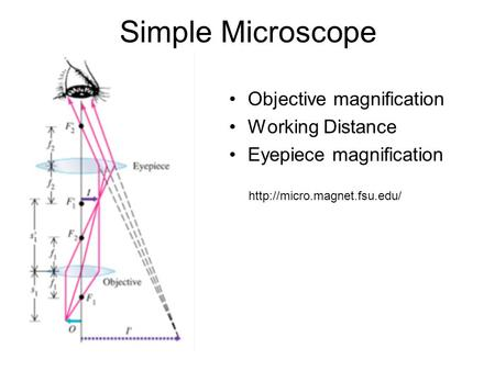 Simple Microscope Objective magnification Working Distance Eyepiece magnification