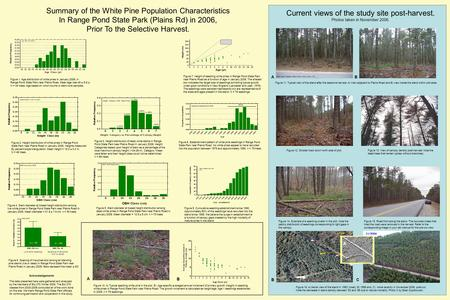 Figure 1. Age distribution of white pines in January 2006, in Range Pond State Park near Plains Road. Mean age was 49 ± 5.8 yr. N = 44 trees. Age based.