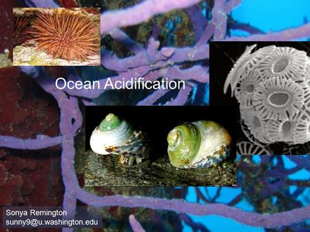 Ocean Acidification Sonya Remington